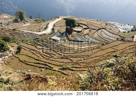 Terracings On The Annapurna Base Camp Trek, Nepal