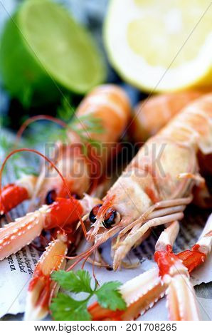 Two Delicious Raw Langoustines with Parsley and Dill closeup on Newspaper. Focus on Animal Eye