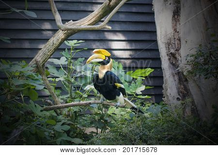 Exotic bird with huge yellow beak sitting on branch