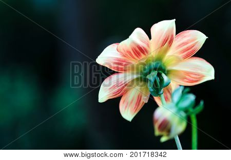 Abstract background with a one flower. One flower on the dark green nature background.