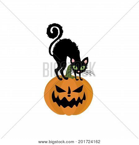 Jack-o-lantern pumpkin and cat on the white background. Vector illustration