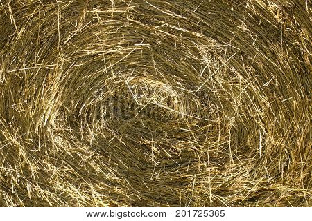 A closeup view of a round hay bale for background use.