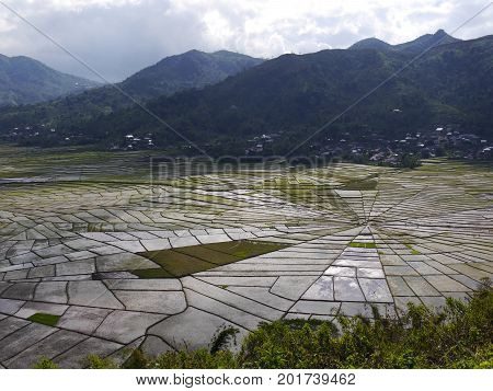 View from above of unique Spider's Web Rice Fields on the Indonesian island of Flores with mountains in background. The shape is used traditionally to divide land fairly amongst families.