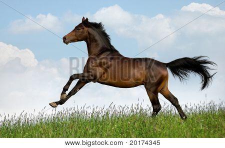 horse running 2