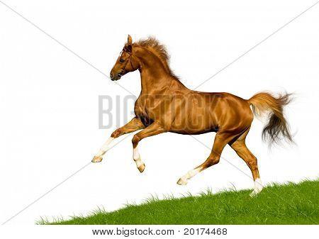 bavarian chesnut horse