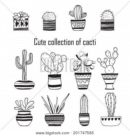 Cute collection of cacti . Vector contour illustration .