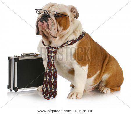 business dog - english bulldog male wearing tie and glasses sitting beside briefcase