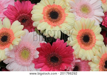 Big pastel gerbers in a flora wedding decoration