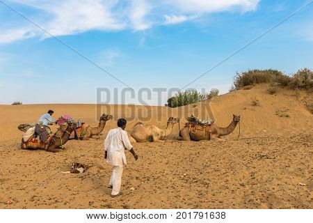 JAISALMER RAJASTHAN INDIA - MARCH 07 2016: Horizontal picture of camels with a native indian men in Thar Desert located close to Jaisalmer the Golden City in India.