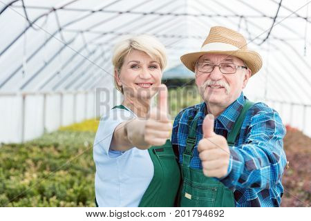 Gardeners standing in a nursery greenhouse showing OK sign. Professional and cheerful gardening experts.