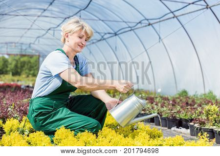Attractive mature gardener watering plants with a watering can in a greenhouse.