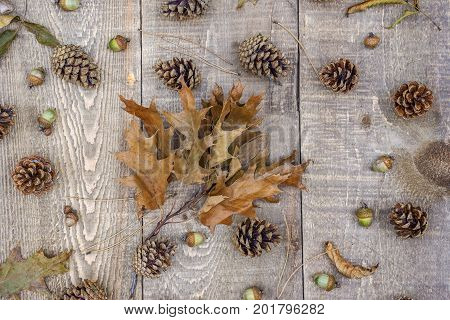 Branch Of Autumn Oak Leaves On Rustic Wooden Boards, Acorns, Pine Cones, Needles And Leaves Scattere