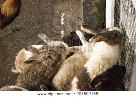 Rabbits are in the fence, Rabbits wait for food
