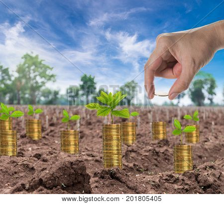 Hand holding the seed on stack of gold coins with seed on the start cultivation Cassava or manioc plant field business investment concept,