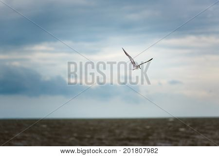 Seagull's flying on the sky to hunt a victim fish in the sea gulf of Thailand.