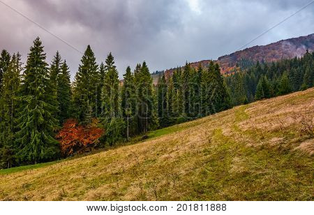 Meadow Among The Forest On Cloudy Autumn Day