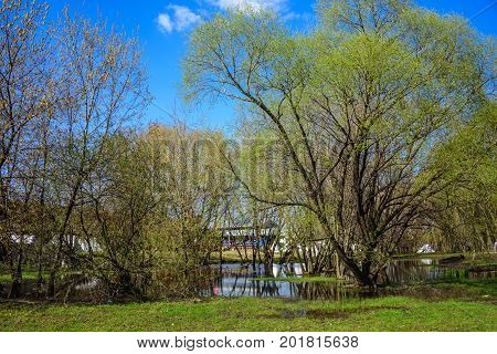 Spring flooded trees with blossoming buds in the Kolomenskoye museum-reserve with arena of the international knight festival Tournament of Saint George on the background