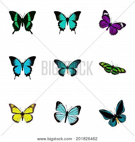 Realistic Lexias, Papilio Ulysses, Beauty Fly And Other Vector Elements