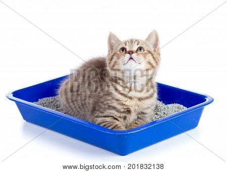 Portrait of little tabby kitten closeup isolated on white