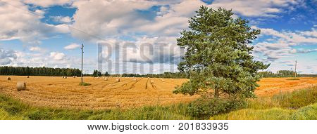 Panorama, agricultural landscape with rolls of haystacks. Rich harvest concept
