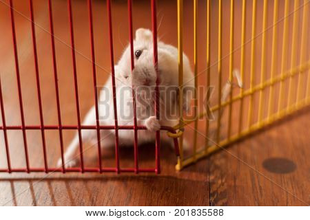 A hamster is in a cage. The hamster trying to get out of cage.