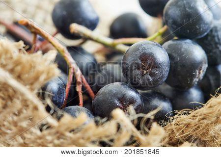 Aronia Berries (black Chokeberry)