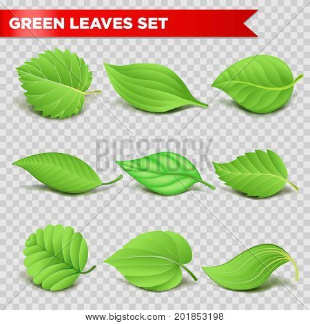 Green leaf 3D logo template for eco environment, nature ecology and energy or bio food product symbol. Maple, birch or oak and aspen, poplar or elm leaf vector isolated set on transparent background