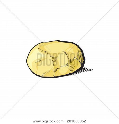 vector sketch cartoon ripe raw peeled yellow potato without peel. Isolated illustration on a white background. Vegetable fresh natural product, healthy lifestyle, eating concept