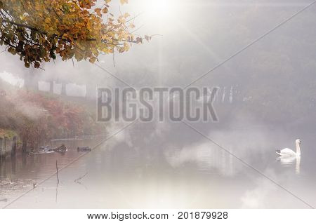 Morning fog over a lake with white swan during autumn