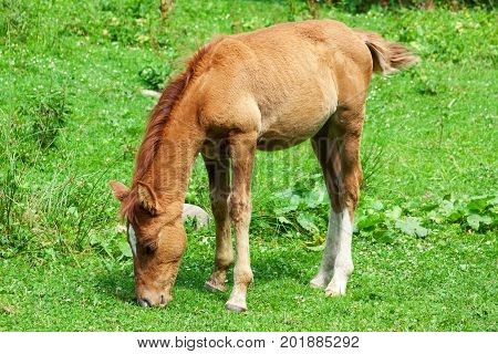 Foal Eat Grass in a Forest Glade extreme closeup