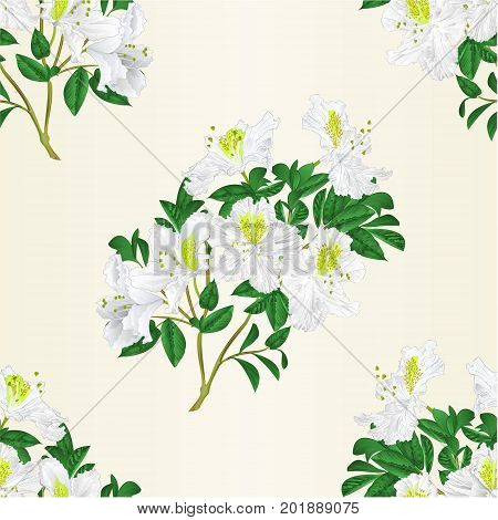 Seamless texture white rhododendron twig with flowers and leaves mountain shrub vintage vector editable illustration hand draw