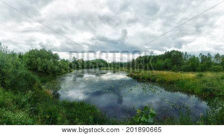 Forest river. Woodland bog. Summer colorful landscape.
