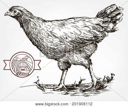 chicken breeding. animal husbandry. livestock. vector sketch on a grey background