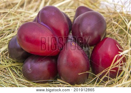 Plum Harvest. Many Purple Plums. Rows With Plums. Plums Close Up