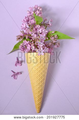 Abstract lilac in cone on paper background