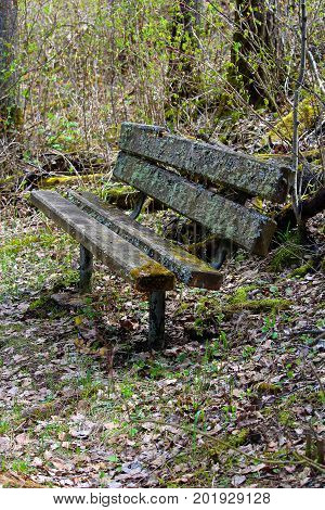 A Moss Covered Bench In The Forest