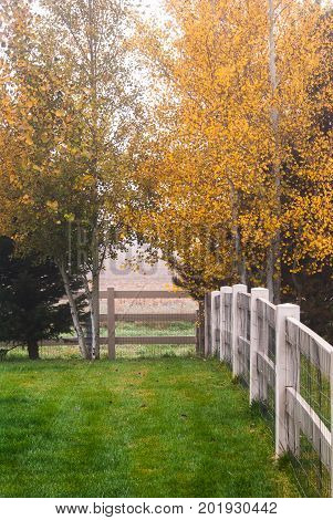 Autumn colors on a misty morning in the back yard.