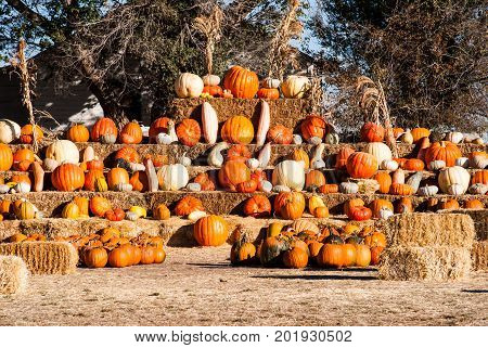 Pumkins and gourds on display in autumn for Halloween.