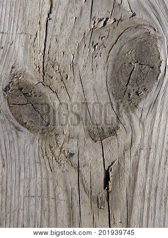 Image of a Space Alien on a wooden board as a nature joke
