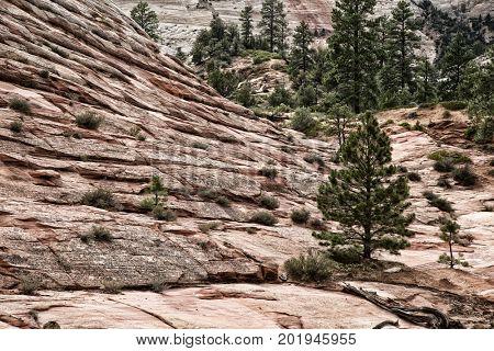 Checkerboard Mesa at Zion National park in Utah, United States