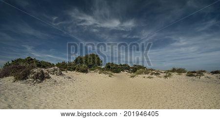 Knoll Beach sand dune, Studland Dorset UK, Summer 2017