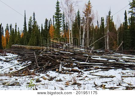 Slash piles left after clear cutting a logging area