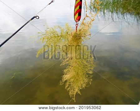Casting Out For Fish And Catching Weeds