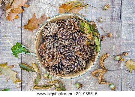 Top View Of Rustic Bushel Full Of Autumn Pine Cones And Oak Leaves