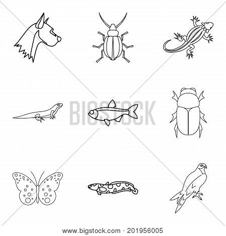 Wood beetle icons set. Outline set of 9 wood beetle icons for web isolated on white background