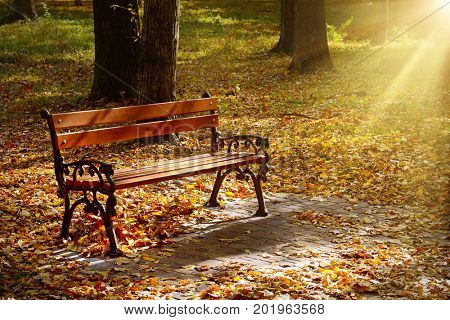 Beautiful garden bench in autumn park illuminated by sun. Bright yellow fallen leaves cover ground.