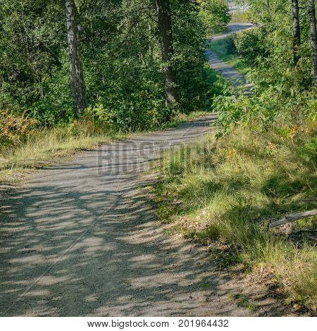 S-shaped trail/road ahead with plants and trees besides