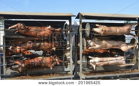 Young roasted piglets whole on a spit