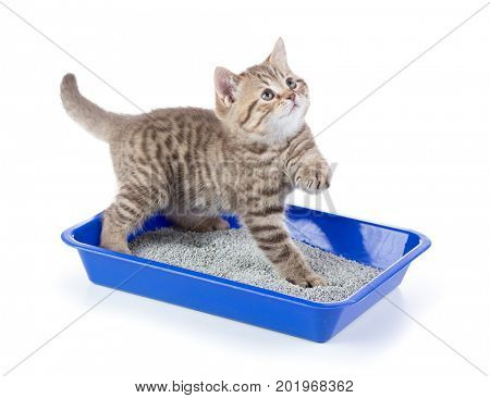 Funny cat in toilet tray box with litter isolated on white