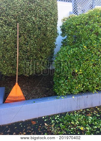 Rake And Leaves In Home Garden
